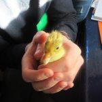 Duck Update
