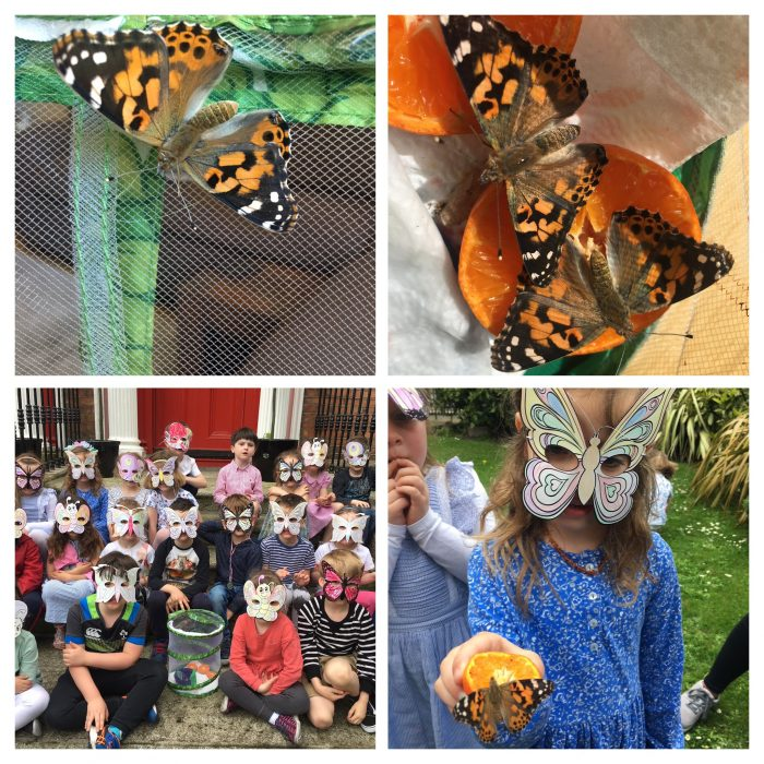 Butterfly Update from KGA