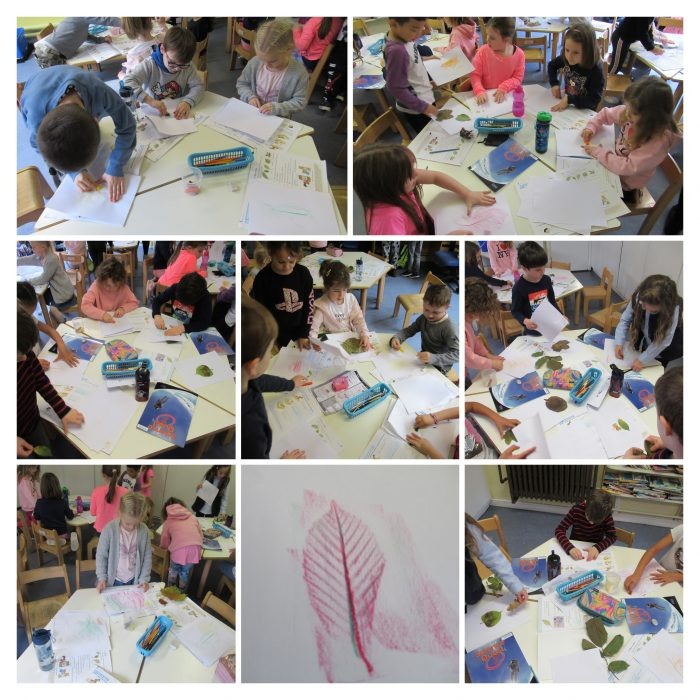Leaf Rubbing – Form 1 Science